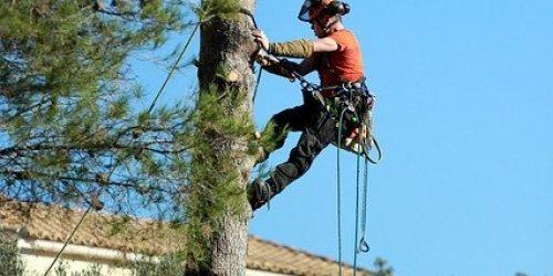Trädfällning Värmdö