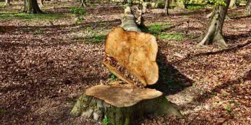 Trädfällning från marken värmdö